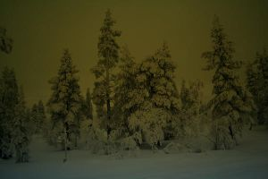 snowy forest by juxxo