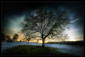 Soul of tree by zardo