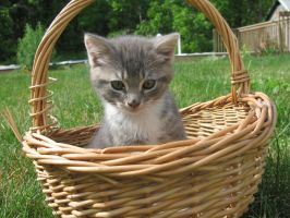 Kitten in the Basket by The1980sKunoichi