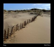 Pegs by mad1dave