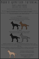 Mudd's Genetics Tutorial - Page 4: B and D-Series by Canidae-Mayhem