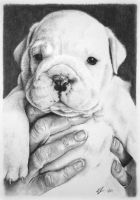 Bulldog Pup - NOW SOLD by bivoirart