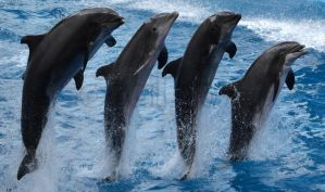 Synchronized by CetaceanNerd