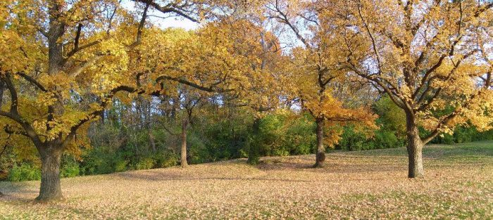 Fall Trees in Forest Park by superdavej