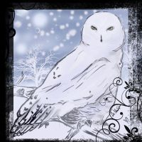 Snowy Owl by CitricLily