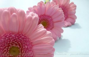 Light Pink by ginas-cakes