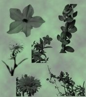 Flowers and Borders Brushes by Eblis-Stock