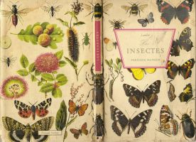 Insects by MizoShu