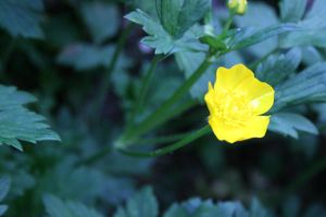 Yellow Flower Of Nature by luhjuh