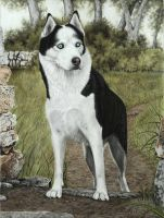 Hundeportait-Husky-Pastell by AtelierArends