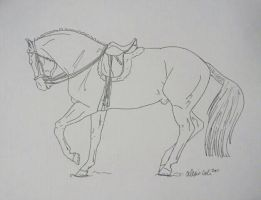 Dressage Horse Free Lineart by FaithTheReiningMare