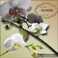 orchids by libidules