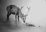 The Stag and the Otter - nightrunner - by nowsy