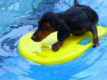 Dog Swim by reviia