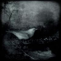 Bird Songs Of The Mesozoic by intao