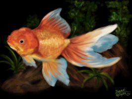 Goldfish-oranda by pichinayu