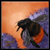 Red-tailed Bumblebee by Clu-art