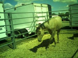 Wild Horse Captured 4 by SPEC-Nordanners