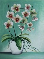 White orchid by worldIsee