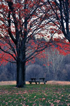 Table by the Tree by EmersonStem