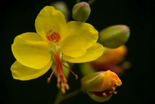 Deep yellow by Chechipe