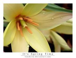 It's spring time by leocbrito