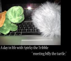 a day in life with spirky 6 by Gatewhale