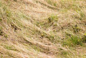 Dry Grass by saltedm8