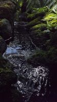 Conservatory Photo-Fern Room-Mini Rapids 2 by DarlingChristie