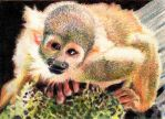 10.8 Squirrel Monkey by theperian