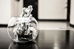Day 352: Wilting Flowers. by umerr2000