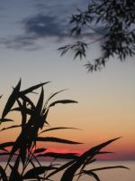 Plant Silhouette at Sunset 2 by living-in-the-clouds
