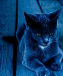 the cat. by lordofmeesi