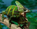 Laughing Chameleon by Xs9nake
