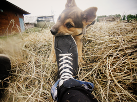 .my dog ^^. by Aquilions