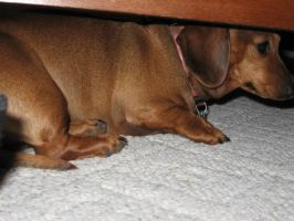 Hiding-BondOfFlames by Dachshund-Devotion