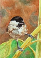 Chickadee on a Stem ATC by waughtercolors