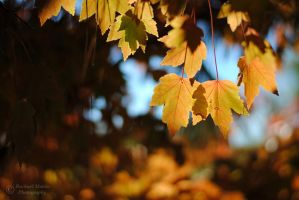 Autumn Leaves 1 by VisualPoems
