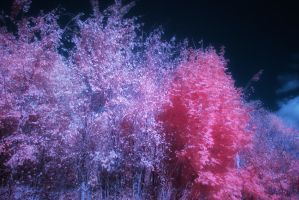 Infrared 24 by kelmeloo
