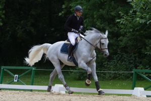 Grey Horse Warmup for Showjumping by LuDa-Stock