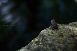 Is a Frog by BAproductions
