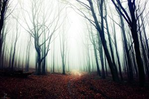 If These Trees Could Talk XIX. by realityDream