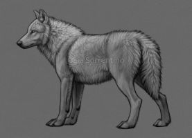 Standing Wolf Premade - SOLD by makangeni