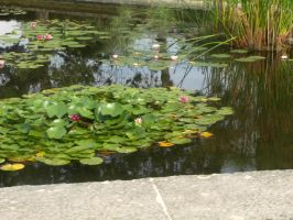 water lilies 2 by Teeno2007