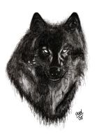 Wolf by TheFranology