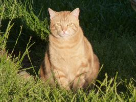 Real Life Garfield by DC4894