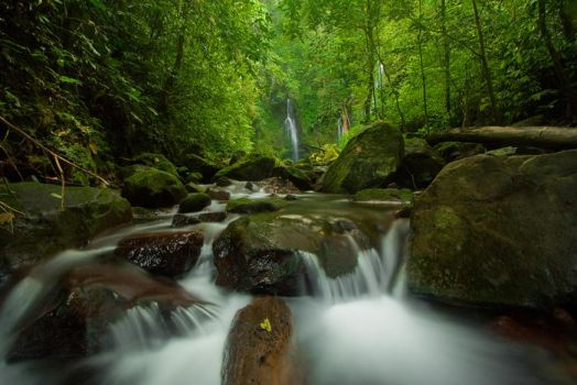 Anai's Rainforest by mfimages