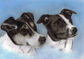 Jack Russell commission by ADRIANSportraits