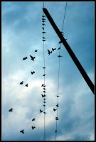 Flock On The Wire by Jeremyti