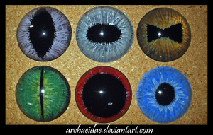 Painted Eyes - Practice Set 1 by Archaeidae